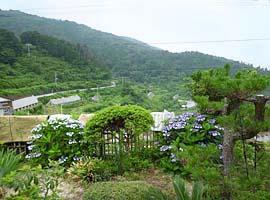 庭からの眺め