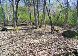 自然豊かな山林