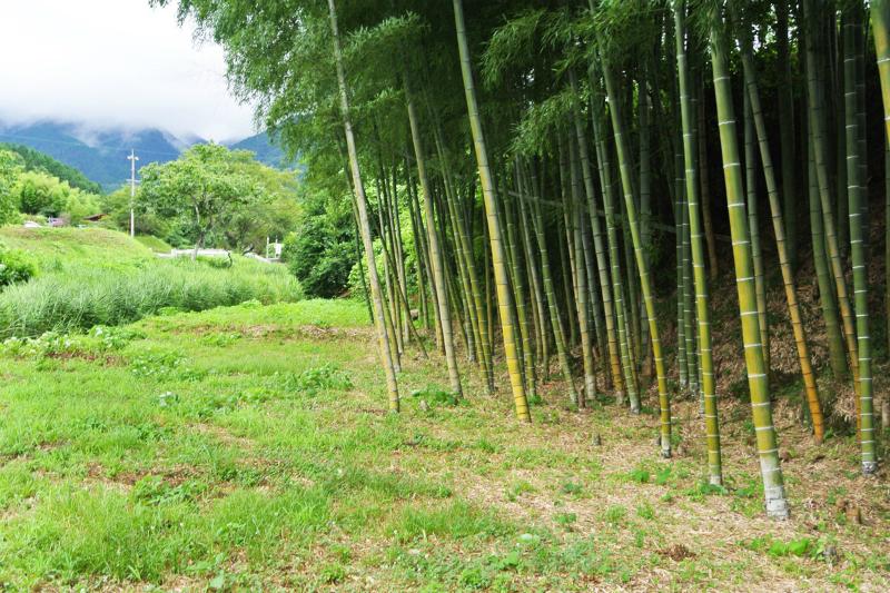タケノコ掘りが楽しめる竹林