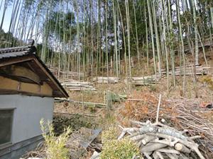 覆い茂っていた竹林