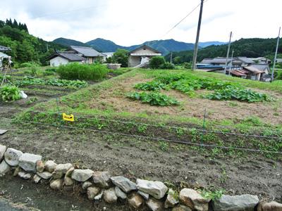 畑では約10種類の野菜を無農薬で栽培されています