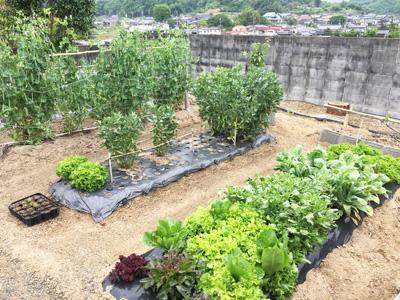 多種類の野菜を栽培