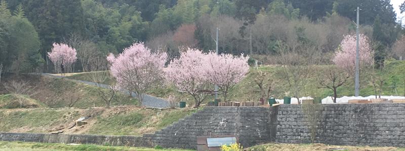 前の持ち主の方に送った桜の写真