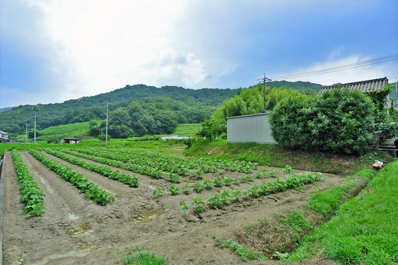 地続き農地