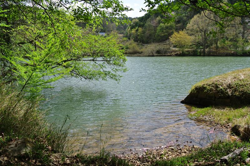 目の前に広がる池