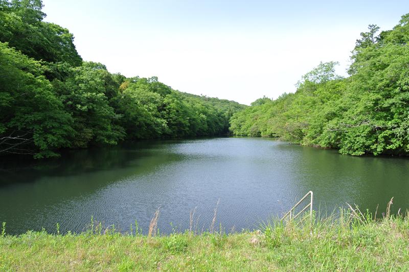 すぐ脇にある池
