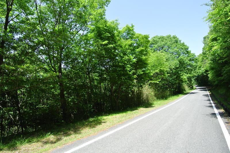 南側の舗装公道