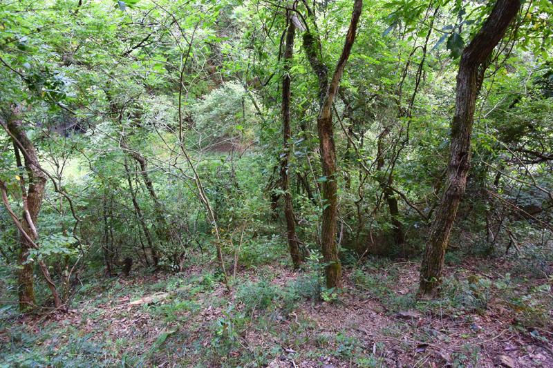 傾斜地の山林