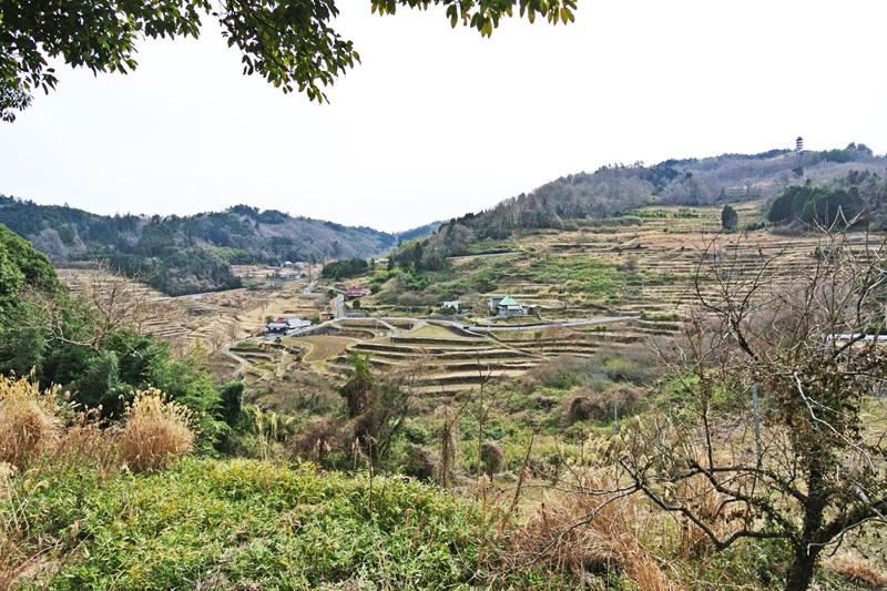 上山の千枚田