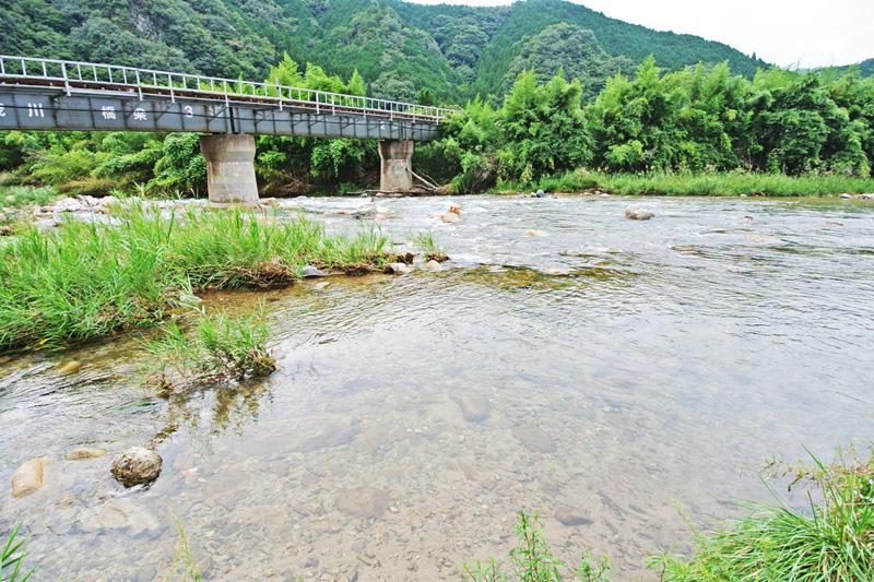 悠々と流れる加茂川