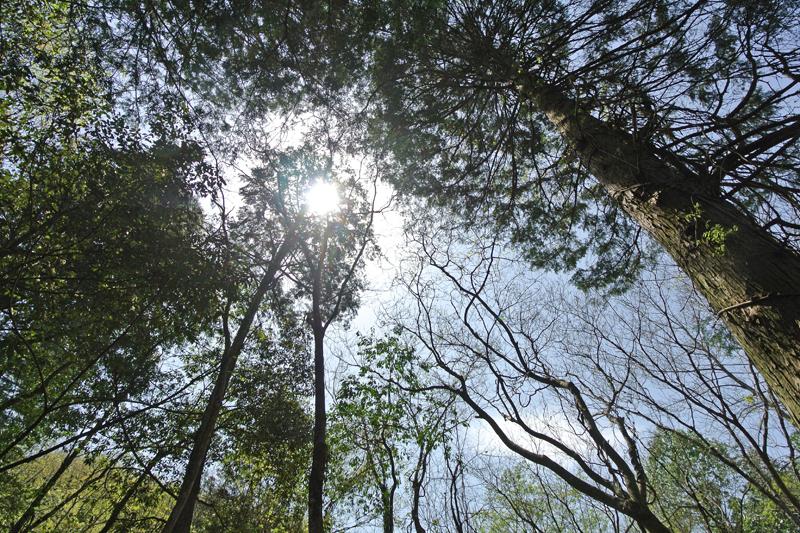 木々の様子