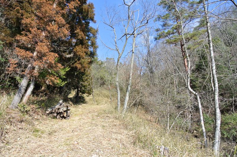 広葉樹と針葉樹