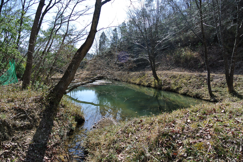 雰囲気の良い池