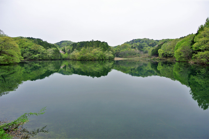徒歩圏内にある、水鳥戯れる池