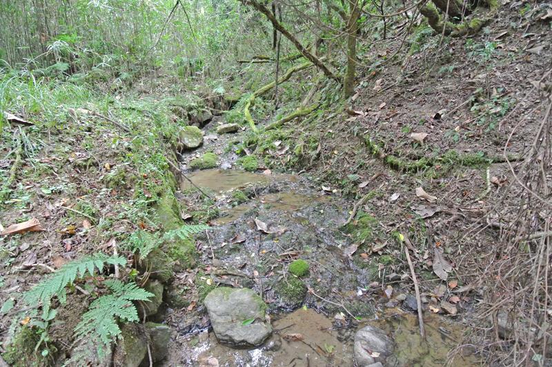 敷地内を流れる谷川