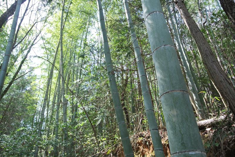 竹もあります