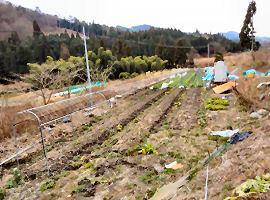 今は 約1反の畑で野菜を作っています まだ使用していない畑が 6反あるそうですよ