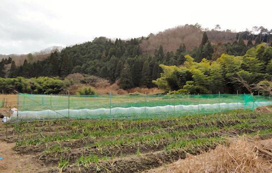自然豊かな場所に畑があります