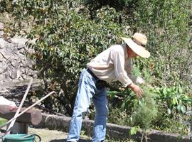 一人でコツコツと庭作りに励んでいます