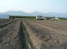 広大なネギ畑