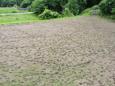 夏には蕎麦を植える予定。沢山の鹿の足跡が・・・