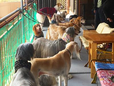 犬仲間集結!