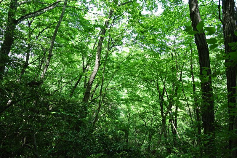 清々しい森の空気