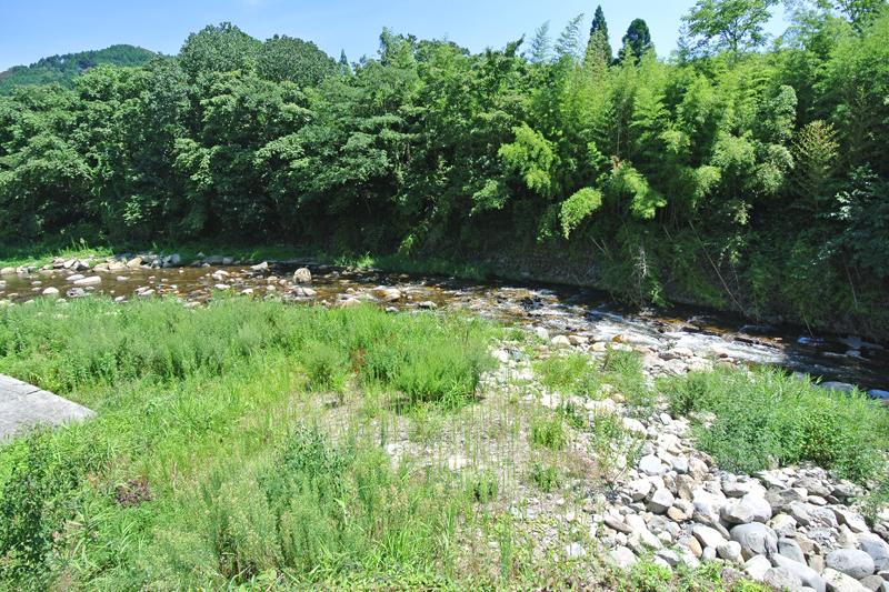 近くを流れる加茂川