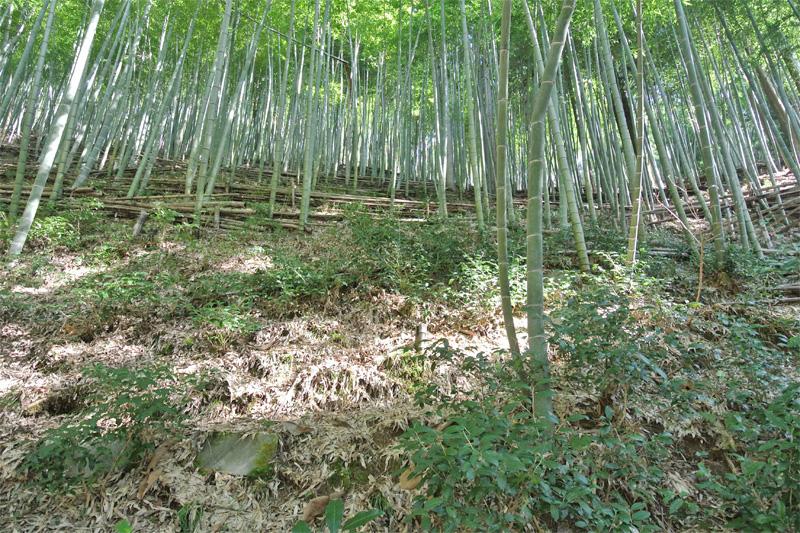 山林(竹林部分)