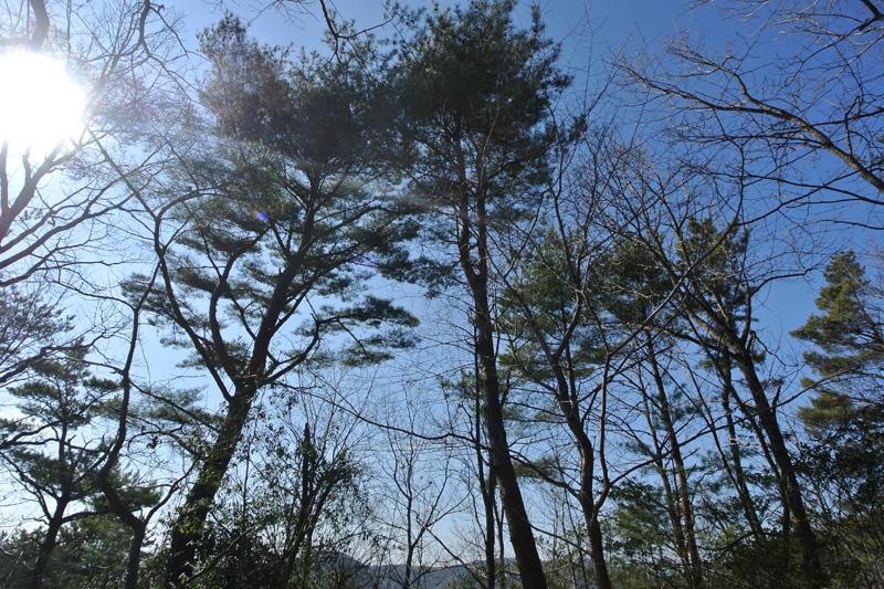 樹種はマツや広葉樹