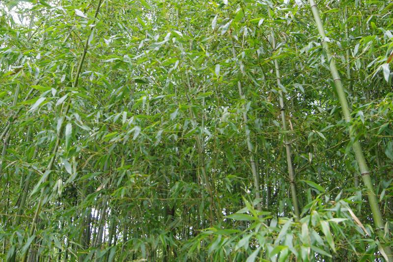 物件奥の竹林