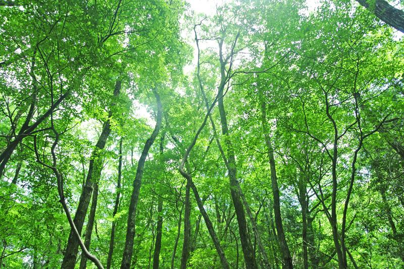 広葉樹の木漏れ日